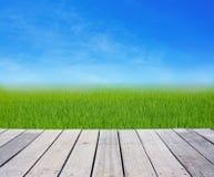 Terrazzo di legno con l'erba verde del giacimento del riso su cielo blu Immagine Stock Libera da Diritti