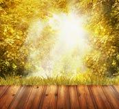Terrazzo di legno di Brown che trascura le foglie di autunno gialle e luce solare Fotografie Stock Libere da Diritti