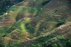 Terrazzo di Longji, Guilin Fotografie Stock Libere da Diritti