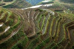 Terrazzo di Longji, il Guangxi, porcellana Fotografie Stock Libere da Diritti
