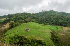 Terrazzo di verdure di agricoltura che coltiva nella collina della montagna della foresta con il cielo nuvoloso Fotografie Stock Libere da Diritti