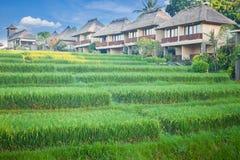 Terrazzo e villaggio del riso Fotografie Stock Libere da Diritti