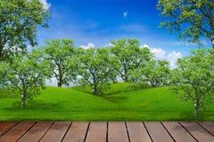 Terrazzo in foresta Fotografia Stock Libera da Diritti