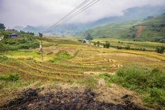 Terrazzo nel PA del Sa, Vietnam del riso Fotografie Stock