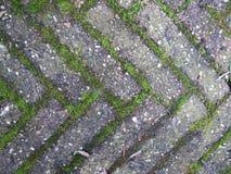 Terrazzo normale della pavimentazione del mattone con le erbacce ed il muschio nel fratempo Immagine Stock