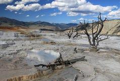 Terrazzo superiore in Yellowstone NP immagine stock