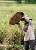 TERRAZZO UBUD TEGALLALANG DEL RISO DELL'ASIA INDONESIA BALI Fotografie Stock Libere da Diritti