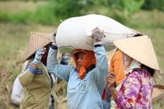 TERRAZZO UBUD TEGALLALANG DEL RISO DELL'ASIA INDONESIA BALI Fotografia Stock Libera da Diritti