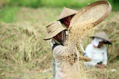 TERRAZZO UBUD TEGALLALANG DEL RISO DELL'ASIA INDONESIA BALI Fotografia Stock