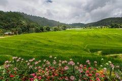 Terrazzo verde del giacimento del riso con la via sulla montagna con i fiori Fotografie Stock