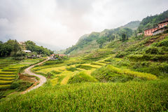 Terrazzo verde del riso nel villaggio di Cat Cat, PA del Sa, Vietnam Fotografia Stock