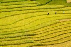Terrced ryżowi pola - trzy kobiety odwiedzają ich ryżowych pola w Mu Cang Chai Zdjęcie Stock