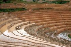 Terrced ryż pola Zdjęcie Stock