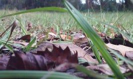 Terre-à-terre Photo libre de droits