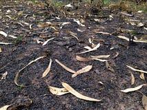 Terre après un feu brûlé Photo stock