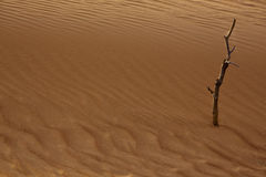 Terre aride sèche Photo libre de droits