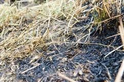 Terre avec l'herbe brûlée par le feu photo stock