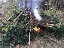 Terre brûlante de nettoyage de brosse et de débris photographie stock libre de droits