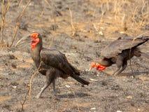 Oiseaux africains du sud Photo libre de droits