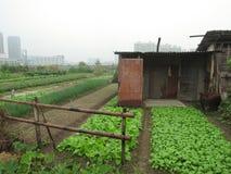 Terre coltivabili in città Immagine Stock