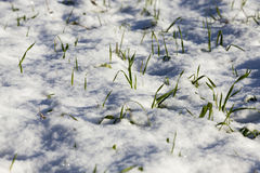 Terre couverte de neige Images stock