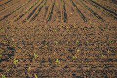 Terre cultivée avec des usines Photographie stock libre de droits