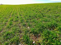 Terre cultivée et jeune herbe verte de ressort sur onduler le terrain montagneux images stock