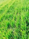 Terre cultivée et jeune herbe verte de ressort sur onduler le terrain montagneux photo libre de droits
