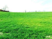 Terre cultivée et jeune herbe verte de ressort sur onduler le terrain montagneux photographie stock libre de droits