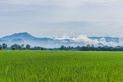 Terre d'herbe Image libre de droits
