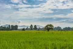 Terre d'herbe Photo libre de droits