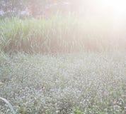 Terre d'herbe Photos libres de droits