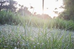Terre d'herbe Image stock