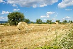 Terre de blé avec des balles de foin Photographie stock