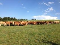 Terre de Cowfarm image libre de droits
