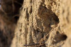 Terre de croustillant Photo libre de droits