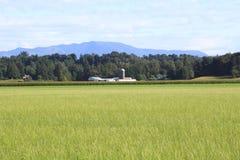 Terre de ferme d'été Image libre de droits