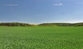 Terre de ferme et les arbres Images stock