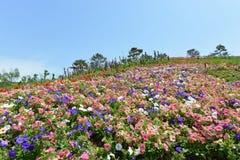 Terre de fleur Photographie stock libre de droits