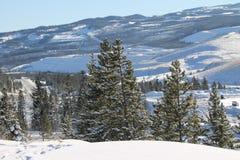 Terre de forêt d'hiver Photos libres de droits
