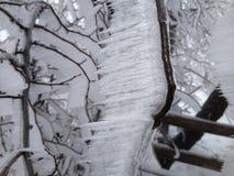 Terre de glace Photographie stock