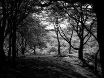 Terre de haute forêt photographie stock libre de droits
