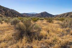 Terre de la savane de la Californie du sud Photographie stock libre de droits
