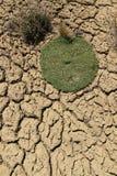Terre de sécheresse Photographie stock