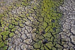 Terre de sécheresse La terre stérile Séchez la terre criquée Configuration criquée de boue Images libres de droits