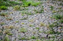 Terre de sol sec de fente avec l'mauvaise herbe verte Photos libres de droits