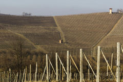 Terre del vino royalty free stock photography
