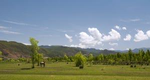 Terre della prateria di rotolamento con il cavallo Fotografia Stock