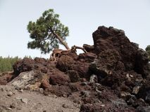 Terre des volcans image libre de droits