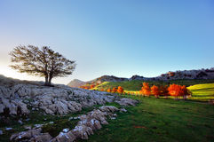 Terre di Arraba in Gorbea con l'albero solo Immagine Stock